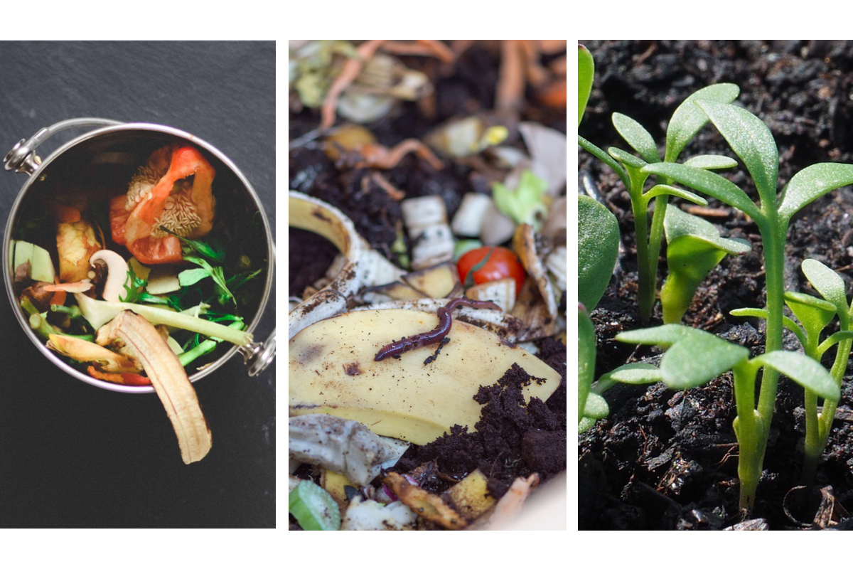 Online Workshop Wurmkompostierung