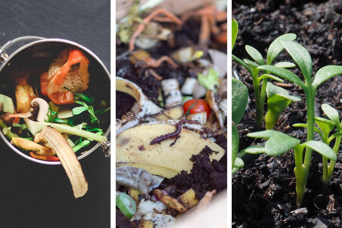 Wurmkompostierung Workshop für Neugierige